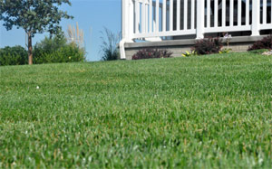 with the right irrigation this lawn is looking perfect